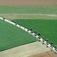 Неков: До 30 години всеки втори с алергия според СЗО, биологичното земеделие ще помогне тази тенденция да се забави