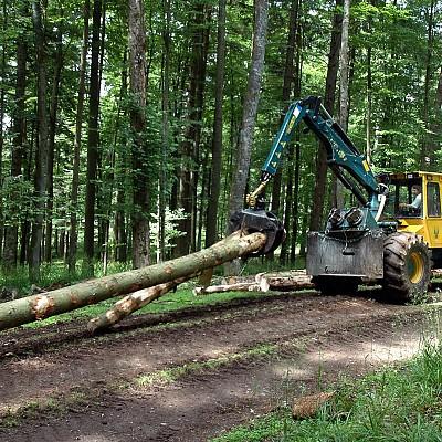 Неков: Какви мерки ще предложи ЕК, съобразно новите предложения на ЕП по новата стратегия за горите?