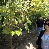 Момчил Неков предлага ЕС да насърчава отглеждането на билки, горски плодове и гъби