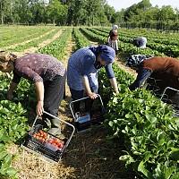 Бъдещето на биоземеделието в работната програма на Европейската комисия