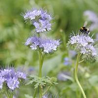 ЕС трябва да стимулира отглеждането на лечебни растения