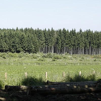 11 поправки на Неков в горската стратегия на ЕС