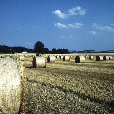 Повече заплахи отколкото възможности пред европейското земеделие в търговското споразумение със САЩ